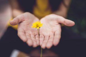 Blume Hände